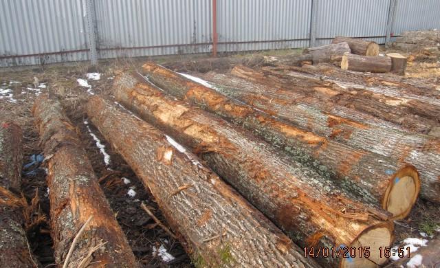 Handel drewnem
